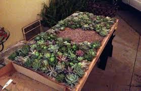 succulent kits succulents