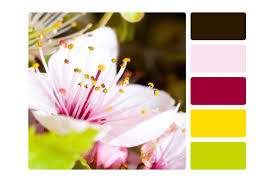 create a color palette 6 foolproof tricks reader u0027s digest