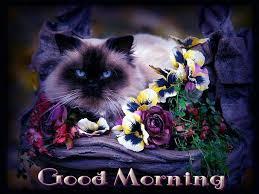 blue morning wallpapers 80 best good morning images on pinterest good day morning
