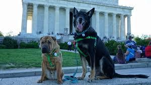 Washington traveling with pets images Dsc04161 800x450 jpg jpg