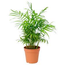 plants plant pots u0026 stands decoration ikea