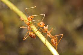 was ist das für ein insekt eine wanze oder was urlaub insekten wanze und kleines insekt stockfoto bild tier makro 61596066