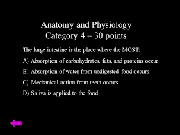 Anatomy And Physiology Place Vocats Jeopardy Ppt Download