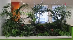 Interior Landscape Custom Interior Waterfall Landscape Youtube