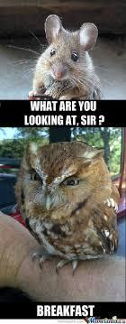 Funny Owl Meme - mr owl owl meme meme and humor