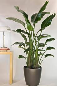 inside house plants beautiful best large indoor plants pictures interior design