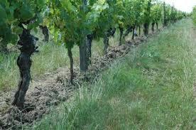 chambre d agriculture gironde chambre d agriculture de la gironde 10 vignes gel233es en