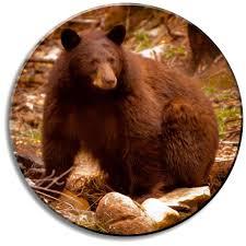 Are Bears Color Blind Black Bears In Durango Colorado