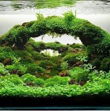 Aquascape Online Best 25 Nano Aquarium Ideas On Pinterest Betta Aquarium