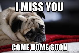 Meme Soon - i miss you come home soon sad pug2 meme generator
