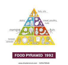food pyramid healthy eating infographic healthy stock vector