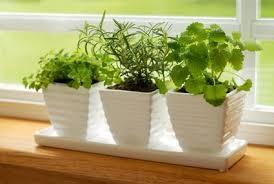 Beautiful Indoor Plants Houseplants Thumbs Up To Indoor Plants Housekeepingchannel Com
