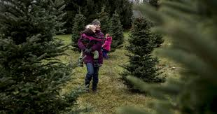 michigan tree farms keep the christmas tradition alive