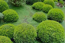 pierre pour jardin zen attractive mousse pour jardin japonais 14 jardin mousse minéraux