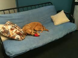 Kong Dog Beds Holiday Favorite Stuffed Kong Toy Houston Pettalk