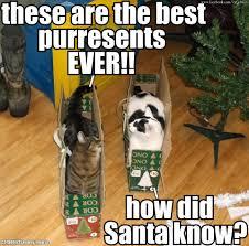 Funny Christmas Cat Memes - funny christmas cat meme cute memes about litle pups