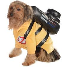 working at spirit halloween halloween dog costume ideas 32 easy cute costumes for your