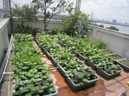 Home Vegetable Gardens by Home Vegetable Gardening Gains Traction In Hanoi Dtinews Dan