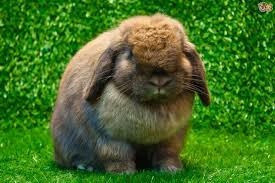 house planet best house rabbit breeds on the planet pets4homes