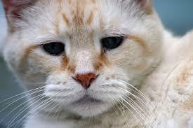 pet euthanasia home pet euthanasia dog cat domestic pets petwise mobile vet