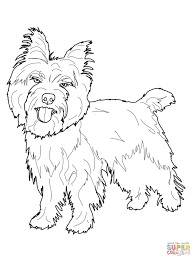 cairn terrier coloring page free printable coloring pages