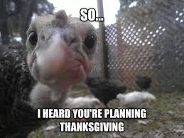 Turkey Memes - introducing suddenly turkey meme guy