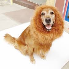 Funny Animal Halloween Costumes Bassion Funny Animal Halloween Costumes Lion Wig Size Small