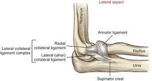 lcl si e lateral collateral ligament