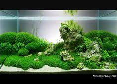 Most Beautiful Aquascapes My 26 Bow Aquarium Pinterest Aquariums Fish Tanks And