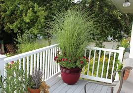 How To Decorate A Pot At Home Best Ornamental Grasses For Containers Growing Ornamental Grass