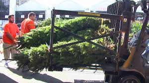 public display of living christmas trees will be banned during the