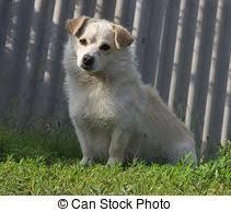 stock photography cute labrador puppy grass 2 cute