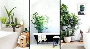 plante pour cuisine plantes salle de bain la fougare bay bilalbudhani me