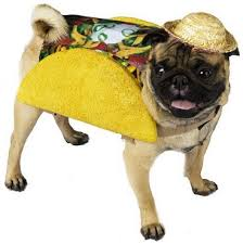 Cute Small Dog Halloween Costumes 104 Dress Images Animals Animal Costumes