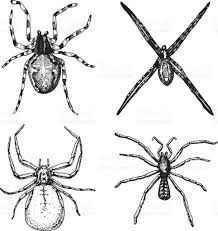 vintage black and white halloween images spider or arachnid species most dangerous insects in the world old