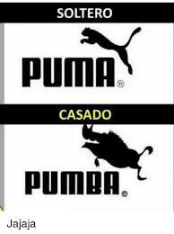 Puma Meme - 25 best memes about puma puma memes