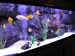 beginners guide to setting up a freshwater tropical fish tank