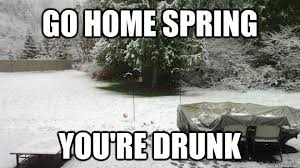 You Re Drunk Meme - go home spring you re drunk go home you are drunk know your