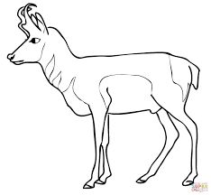 pronghorn antelope coloring page free printable coloring pages