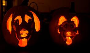 babbling brooke dog pumpkin carving