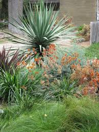 kangaroo paw plant for a tropical landscape with a tropical and