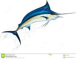 blue marlin stock vector illustration of 21953619
