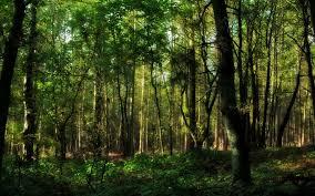tree forest hd wallpaper 1914327