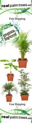 cold hardy palm trees species for colder climates