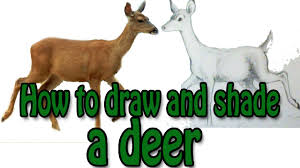 how to draw and shade a deer youtube