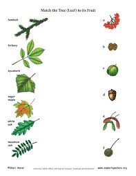 the tree leaf to its fruit