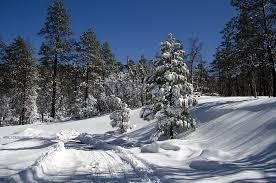 kaibab national forest christmas tree permit sale begins nov 16