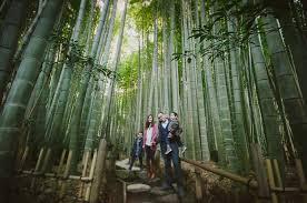 Rhode Island forest images Kamakura bamboo temple photos wedding photographer newport rhode jpg
