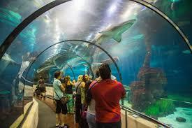 why can u0027t captive breeding of saltwater aquarium fish catch on