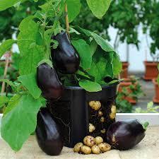 dekorieren artikel aubergine ideen tolles dekorieren artikel aubergine 20 verwirrend